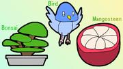 盆栽、鳥、マンゴスチン