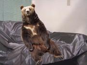 熊となりインタビューに臨む先輩