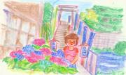 のすじいの昭和色鉛筆戯(ざ)れ絵 小石川白山神社・紫陽花
