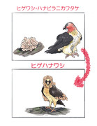 ヒゲワシ+ハナビラニカワタケ