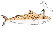 魚ー靑ルちゃん