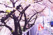 銀獅式桃音モモ『春を感じて』