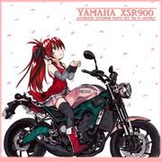 """YAMAHA XSR900 """"XS-V1 Sakura"""" color"""