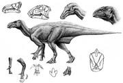 Iguanodon イグアノドン(コラージュ)