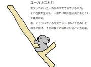 ユーカリの木刀
