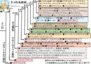 【誰得】細かすぎて伝わりにくいネコ科の系統樹
