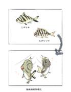 ミギマキ・ヒダリマキ