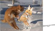 【ポーズ配布】一般的な猫のポーズ