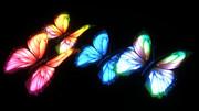 butterfly拡張テクスチャ配布