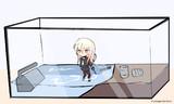 水槽で飼える菊月
