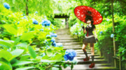 「とある梅雨の日ver2」紫陽花の涙