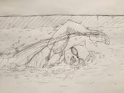 屋上で水浴びする太郎丸