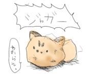 【けものフレンズ】ジャガー!