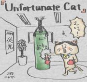 Unfortunate Cat - ボクシング