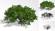 【MMDアクセサリ】低木
