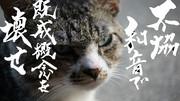 欅坂46 不協和音の歌詞を猫に入れてみた