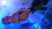イルカと遊泳