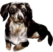 masatakamanの愛犬アッシュ