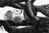 【2回目】フクロウ編集してみました。