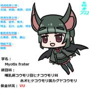 日本の絶滅危惧種『カグヤコウモリ』