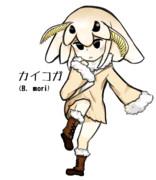 カイコガ(Bombyx mori)