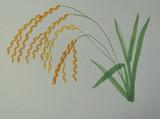 稲を描いてみた