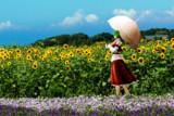 幽香と向日葵畑