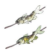 焼き魚(素材)修正版