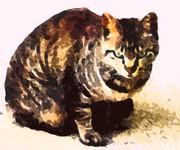 妙に威圧感のあった野良猫 #猫 #イラスト