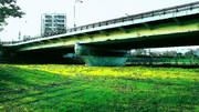 緑と光と橋の下 #風景 #背景 #イラスト