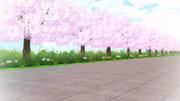【MMD銀魂】桜並木【ステージ配布】