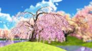 【MMD銀魂】しだれ桜【モデル配布】