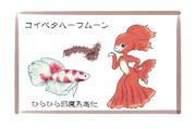 鯉ベタハーフムーン