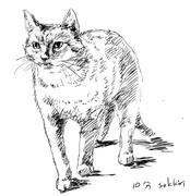10分で描いた猫