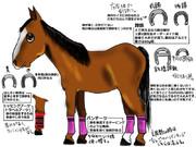 競馬の馬具(脚編)