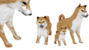 柴子犬【改造モデル】親モデルと比較(hata式 改変)