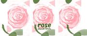 薔薇 ※三連・マグカップ仕様・おむ07937