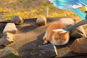 猫を愛でるミクさん