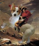 コーギーとナポレオン君