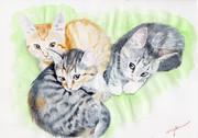 三匹の子猫