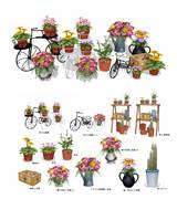 鉢花セット