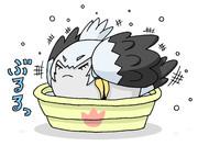 水浴びをするすくすくハシビロコウ