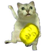 招きMUR猫