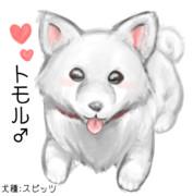 トモル♂(犬種:スピッツ)