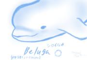 動物落書きシリーズ第一弾「シロイルカ」