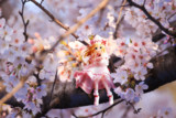 春ですよー!