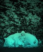 化け猫の森