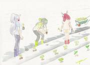 お題:苗植え