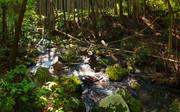 森の中で・・・・