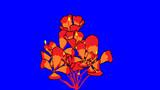 サンユラントリチャワーの花BB